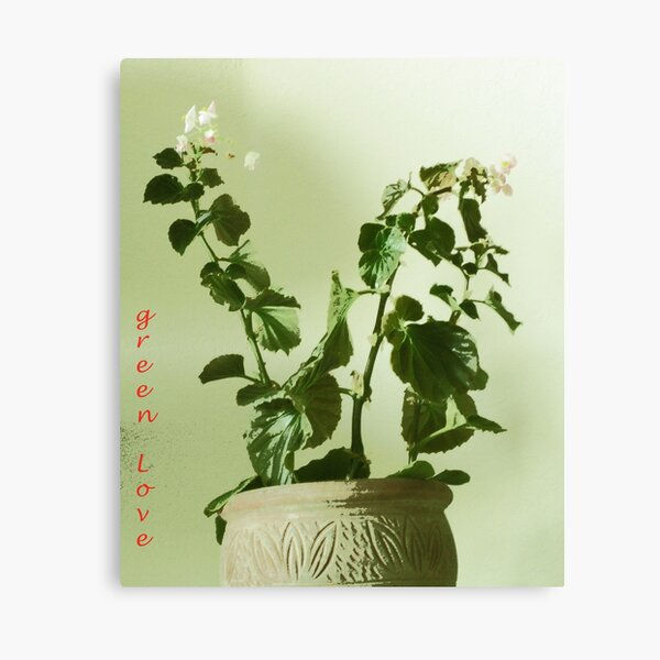 The Plant Also Canvas Print