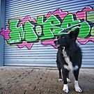 Graffiti Dog by Karen Havenaar
