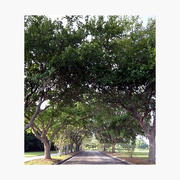 Tree Road Photographic Print