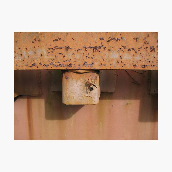 Wasp on Rusted Railcar Photographic Print