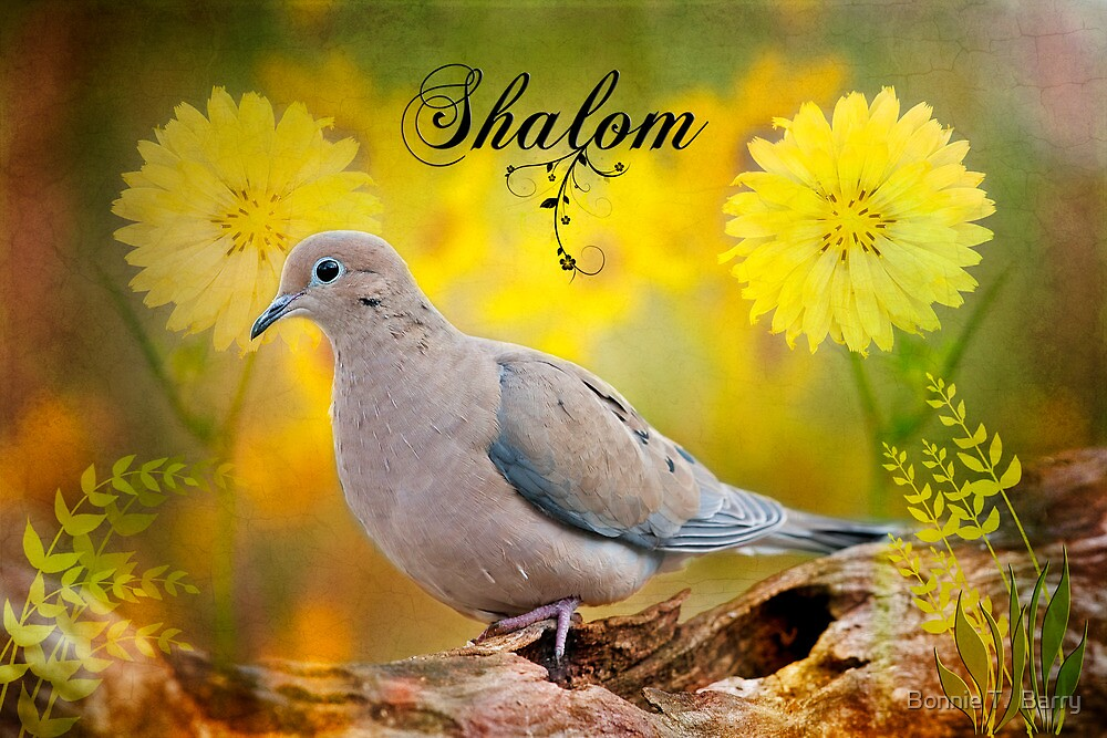 Shalom by Bonnie T.  Barry