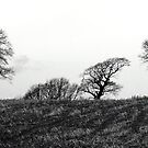 Bare bones of Winter by mikebov