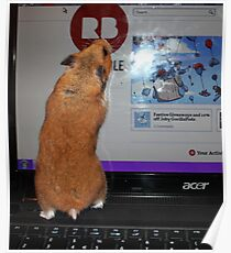 redbubble hamster Poster
