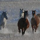 Horses running  by MotionAge Media