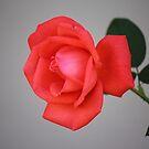 Wall Flower by Bob Hardy