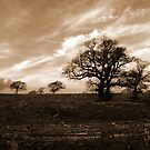 Winter on the Farm by mikebov