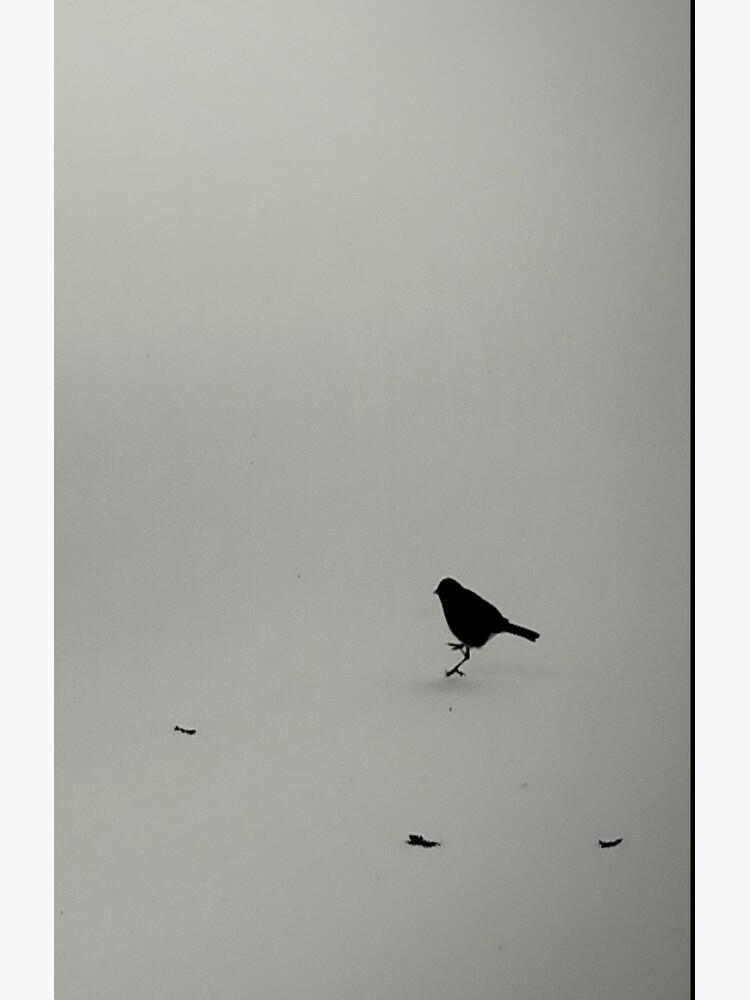 Little Snow Bird by ajlphotography