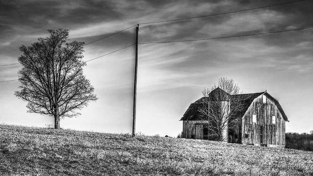 Bare Tree and Barn No. 4 by Aaron Campbell