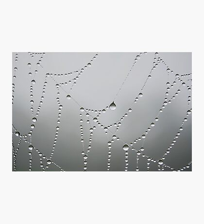 Dew Drops in the Mist Photographic Print