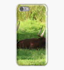 Three Ankole-Watusi iPhone Case/Skin
