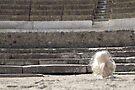 My Colosseum in Pompeii by VeronicaPurple