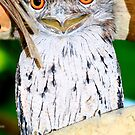 Tawny Frog Mouth close up by robmac