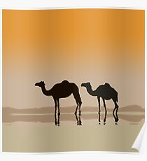 Dromedary camels and a mirage Poster