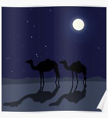 Dromedary camels in Sahara desert night Poster