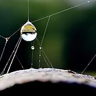 Water Balloon  [ Please view larger ] by relayer51