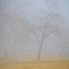Foggy Park Morning by Bo Insogna