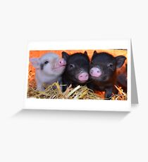 3 Little Micro Pigs Greeting Card