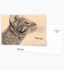 Bengalische Katze Postkarten