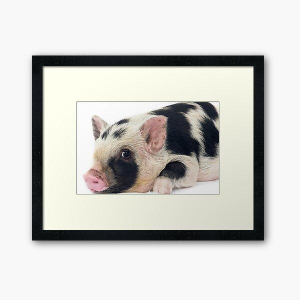 Spotty Micro pig chilling Framed Art Print