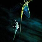 The Stylish Bug by Jim Haley