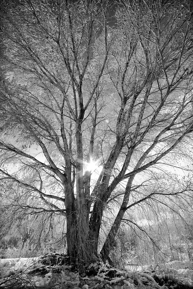 Winter Spread by Bob Larson