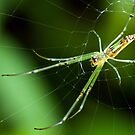 Spinning Web by Mark Lee