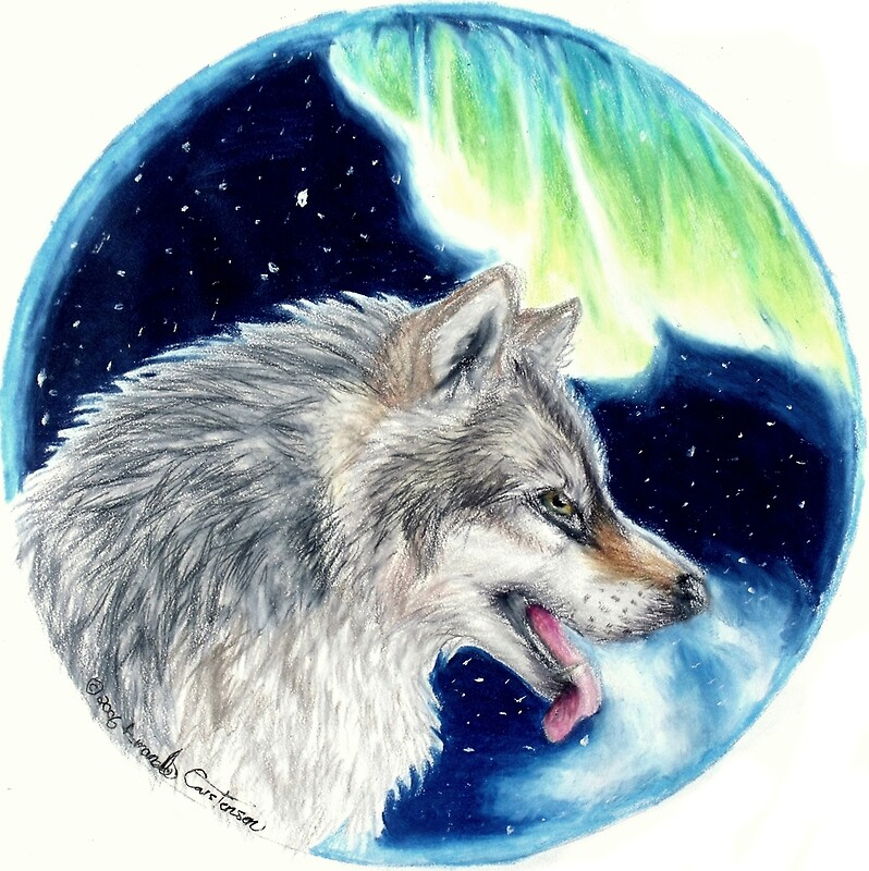 Quot Lupus Borealis Aurora Wolf Colored Pencil Drawing