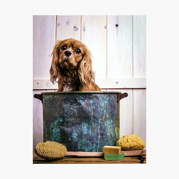 Cavalier King Charles Spaniel Bathtime Photographic Print