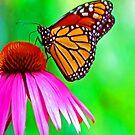Monarch Butterfly iPad Case by ipadjohn