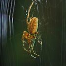Spider iPad Case by ipadjohn