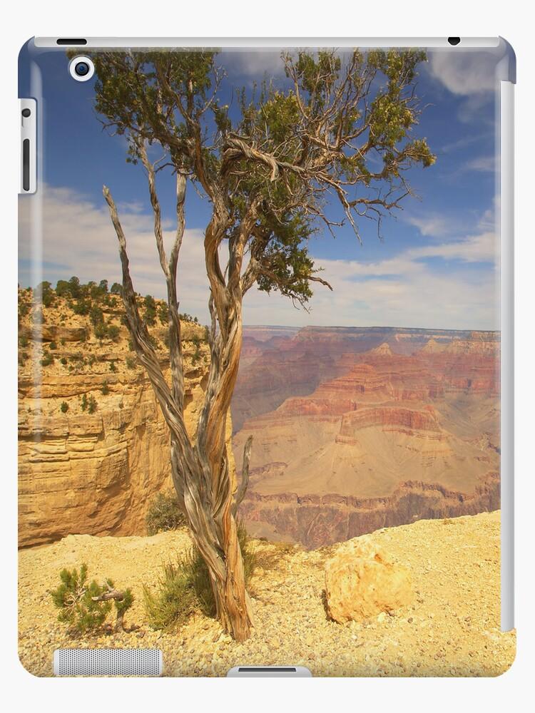 Tough Tree On The Rim iPad Case by ipadjohn