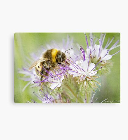 Summer Bee Canvas Print