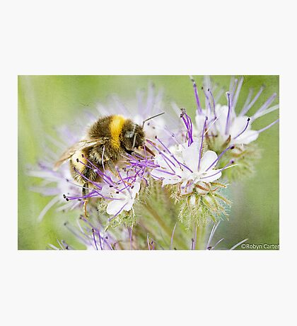 Summer Bee Photographic Print
