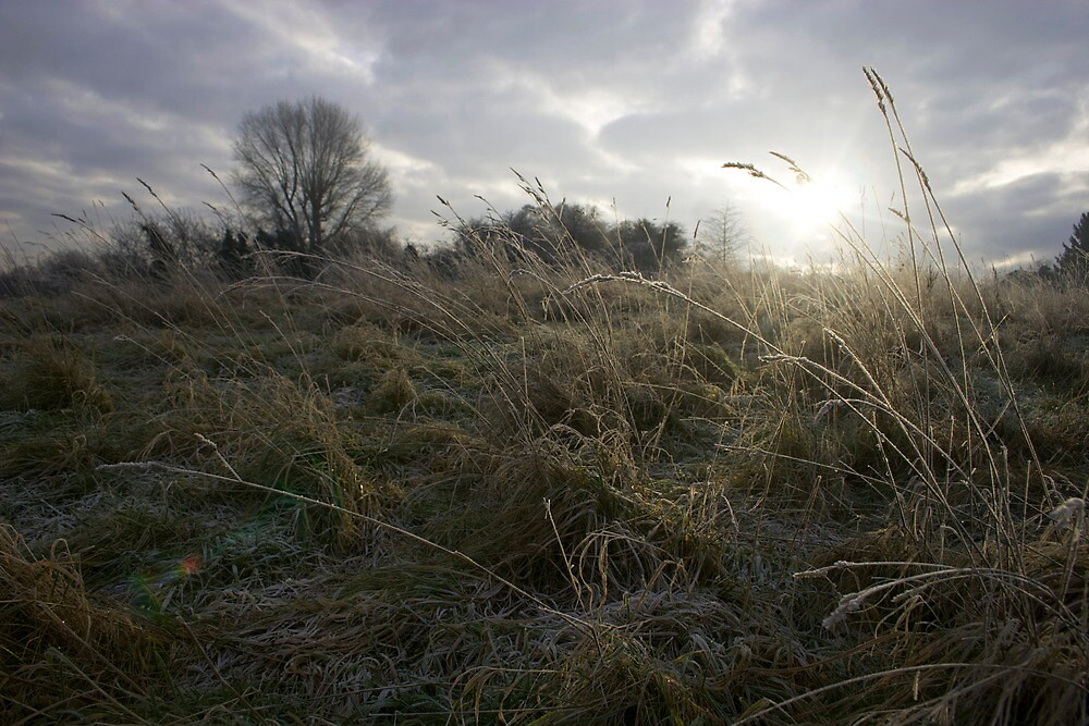 Glow of Winter by James Taylor