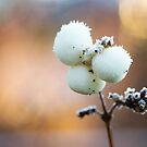 Stick n' Berries by Paul-M-W