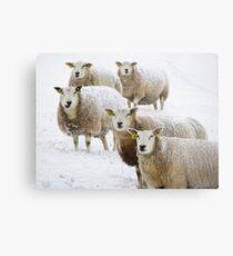 Sheep in snow Metal Print
