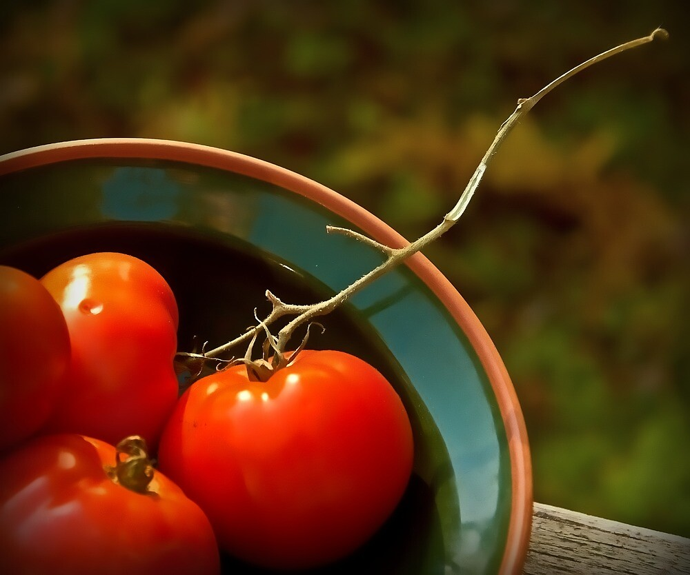 Tomatoes  by Dave  Higgins