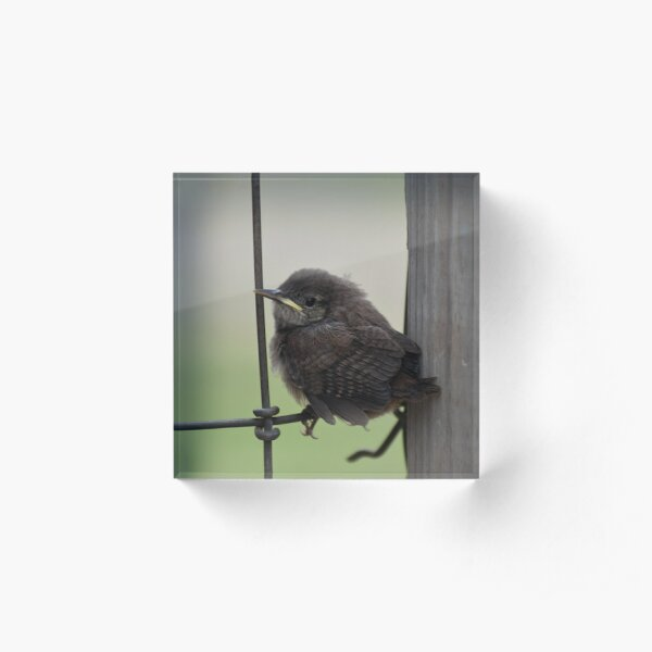 Little Wren Acrylic Block