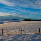 Winter in Alberta, Canada by Jessica Chirino Karran