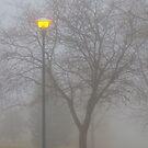 Foggy Morning by Bo Insogna