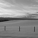 Winter Landscape - Peaceful B&W Alberta, Canada by Jessica Chirino Karran