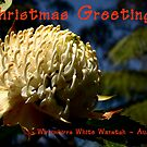 Happy Christmas ~ Wirrimbirra Waratah by Rosalie Dale