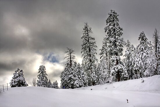 Winter Storm by Sue  Cullumber