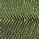 Finely Sliced by Reef Ecoimages