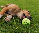 I'm having a ball.  by Alex Preiss