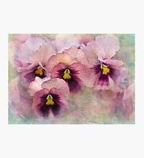 pretty maids all in a row Photographic Print