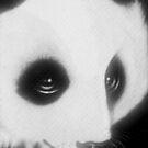 Panda 1 by Angi Baker