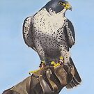 Tethered Tiercel by Tina Hickman