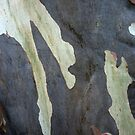 Bark Abstract # 5 by Frederick James Norman