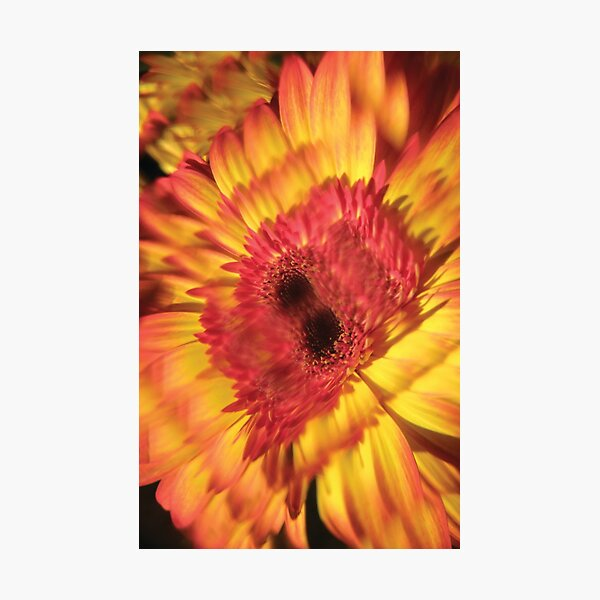 K Flower Yellow Photographic Print